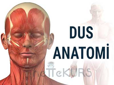 DUS Anatomi Video Ders