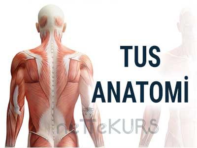 TUS Anatomi Video Ders